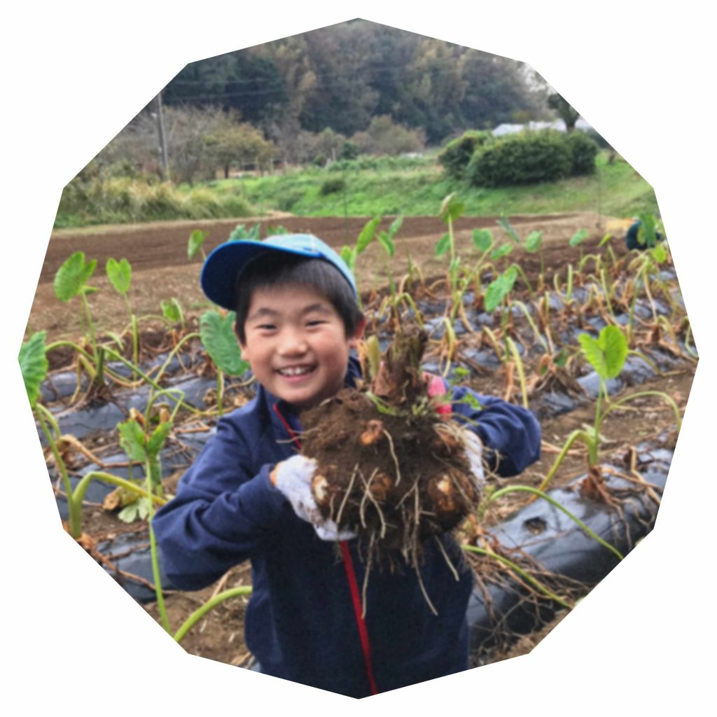 ビーバー隊集会 里芋収穫体験 2018年11月4日